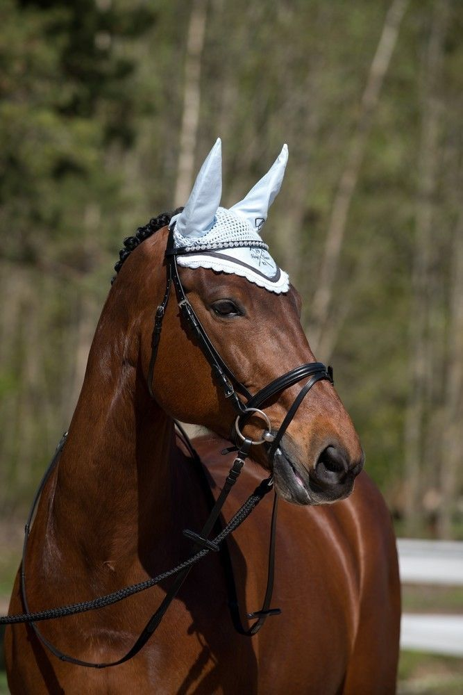 How to Choose Horse Riding Gear