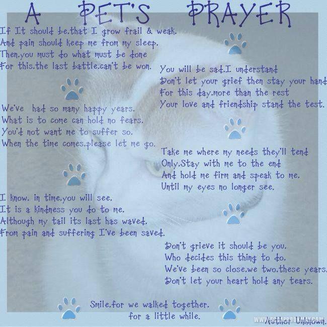 Rainbow prayer for dogs pet s prayer rainbow bridge for our beloved