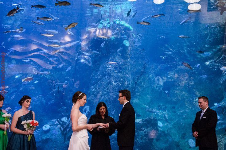 Seattle Aquarium Wedding Photos Seattle Aquarium Wedding