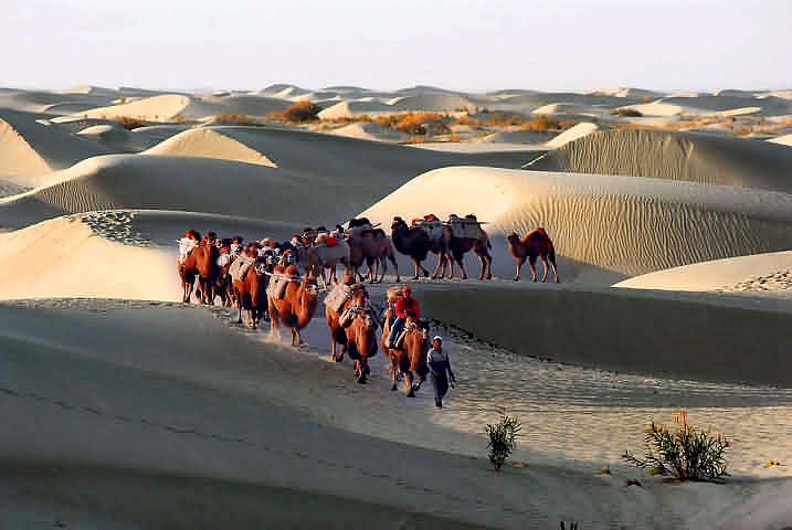 Perfect 57 KB Sahara Desert Camels With Saddles And Rigging On Their Backs