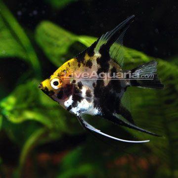 Pin by sandra lee on freshwater aquarium pinterest for Koi tank size
