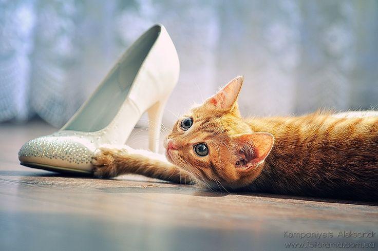 Shoe lover...