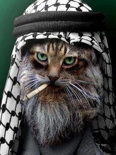 cat smoking cigarette bens stuff pinterest