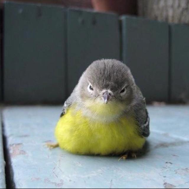 Uhhhh fluffy baby bird...