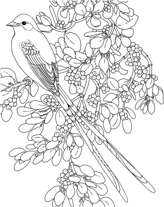 Oklahoma Scissor Tailed Flycatcher Coloring Page Purple Kitty Embroidery Closed See