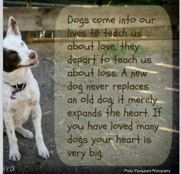 Pets Dying Inspirational Quotes. QuotesGram