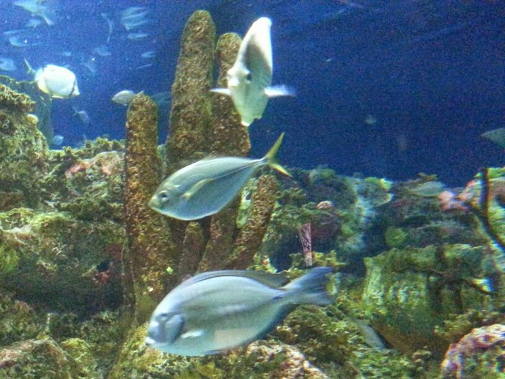 Reef fish 8 photo prints for sale pinterest for Reef fish for sale