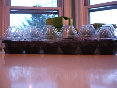 Egg crate seed starter