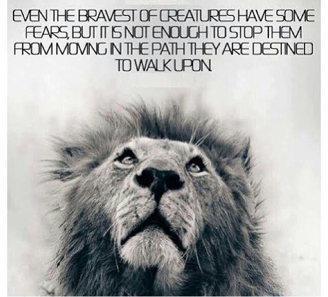Lion Inspirational Quotes Quotesgram