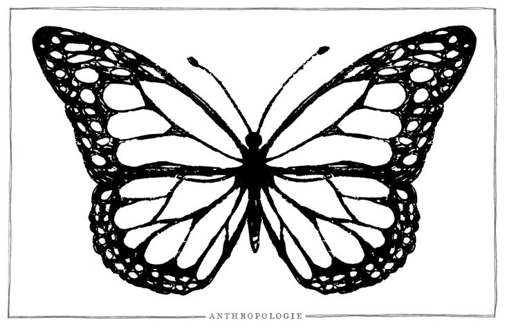 Big Butterfly Coloring Page The Learning Curve Pinterest