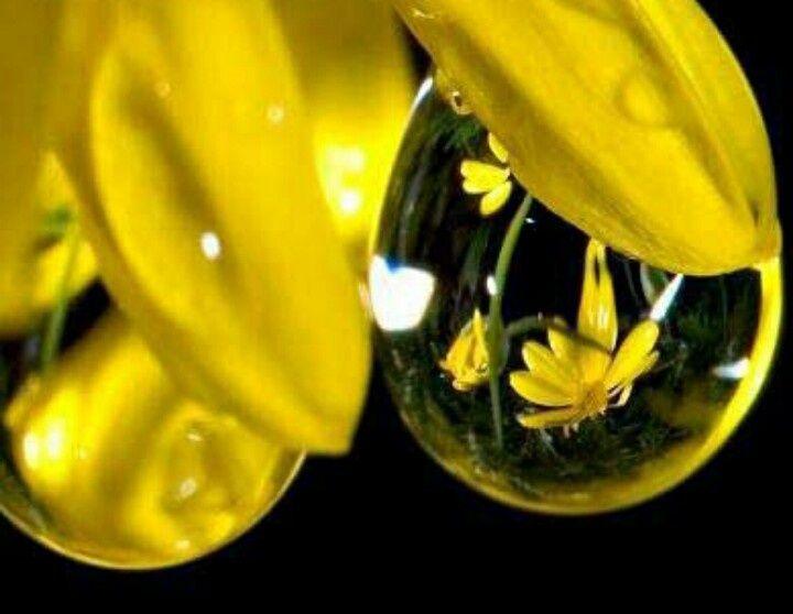 Dewdrops ♥   Dewdrops   Pinterest