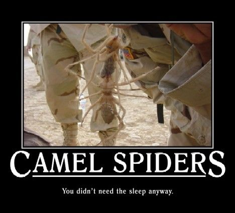 Largest Camel Spider On Record Largest camel spider ever recorded