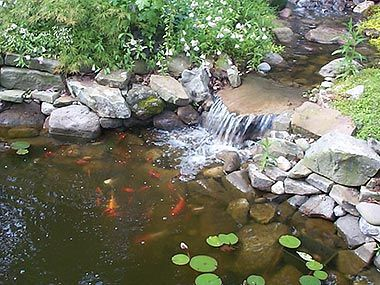 Koi Pond Waterfall Fish Koi Pond Pinterest