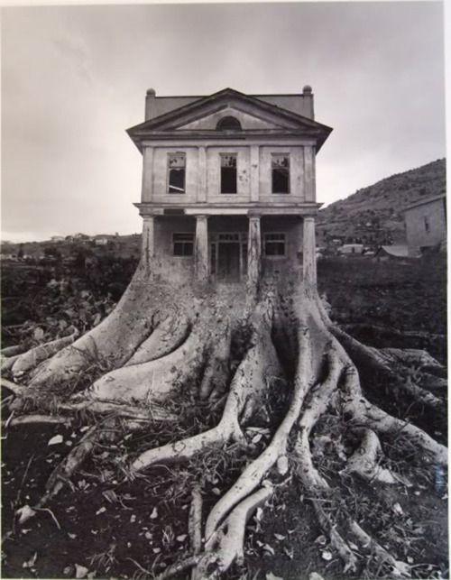 Tree house....