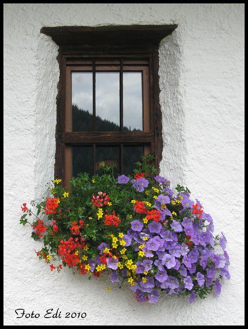 Fehér fal színes virágokkal