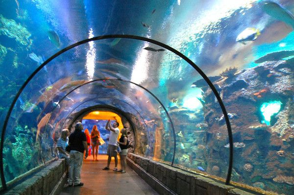 Shark Reef Mandalay Bay Hotel Las Vegas Vacation