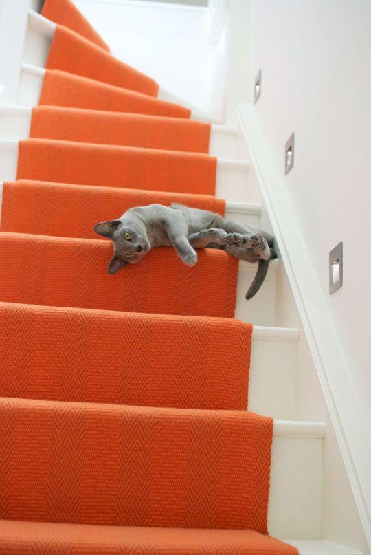 bright orange runner on stair. and cute cat.