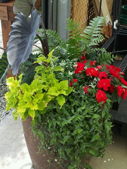 Top 28 ideas for shade containers 17 best images about container garden on pinterest - Container gardens for shade ...