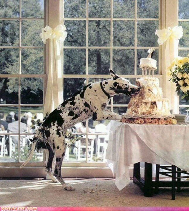 Dogs & Weddings. Probably want to try and avoid this though. Lol