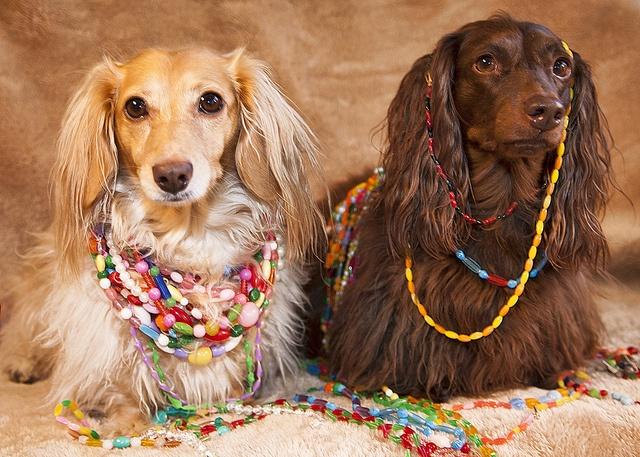 Happy Mardi Gras. | Animals! | Pinterest