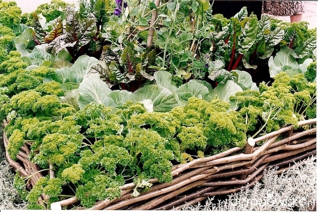 Warzywa w ogrodzie nieco inaczej