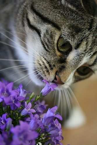 Kitteh with Violets
