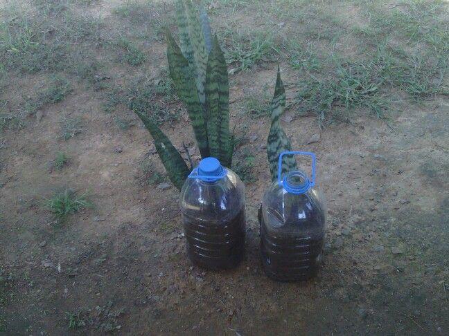 Recyled plastic bottles.