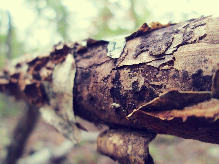 branch bark
