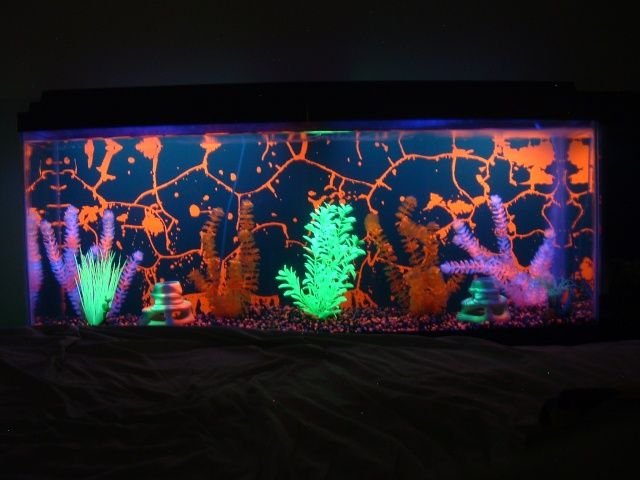 black light fish tank great sensory piece without breaking