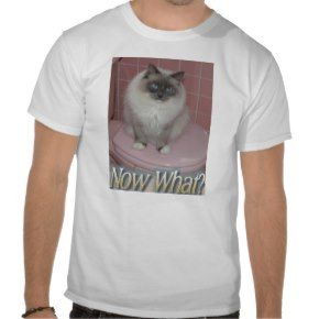 Now What? Cat T Shirts: A selection of cool and funny cat T Shirts