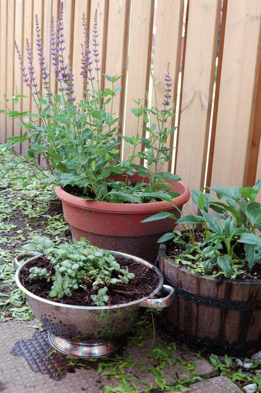 Low Budget Garden Pot Ideas Photograph | Low Budget Garden C
