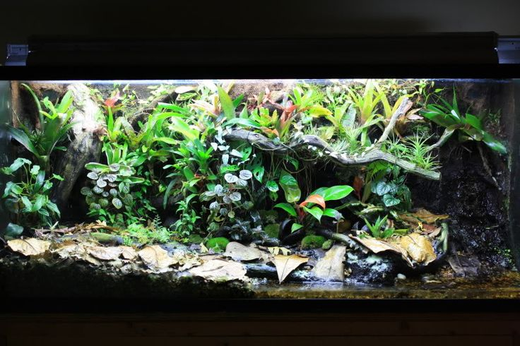150 Gallon Vivarium after a Year | Vivarium | Pinterest 10 Gallon Vivarium