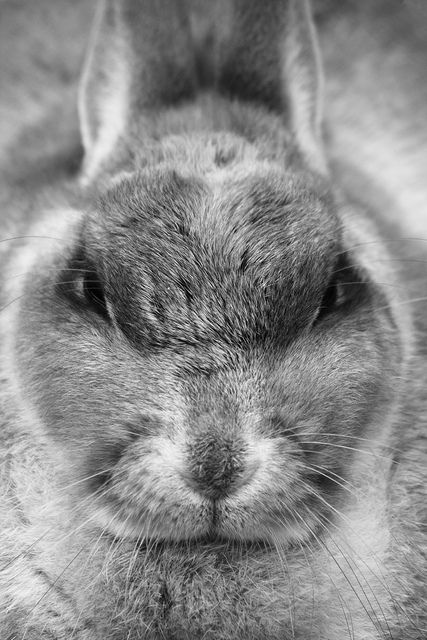 Angry rabbit by Red Junasun, via Flickr | THE NIGHTMARE IN ...