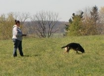 http://www.examiner.com/article/the-german-shepherd-dog-and-breeding-how-to-find-a-stud-dog-part-2    Second of a 3 part article about finding a stud dog.