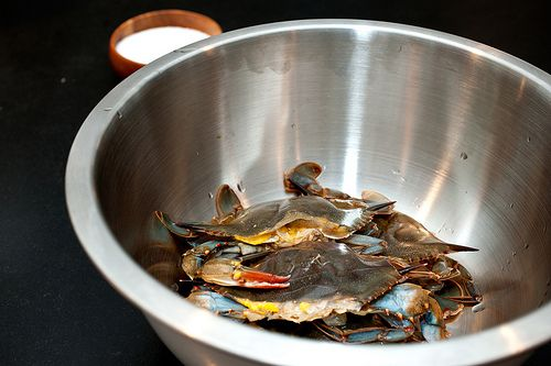 Cornmeal-Crusted Fried Soft-Shell Crabs from Sassy Radish (http ...