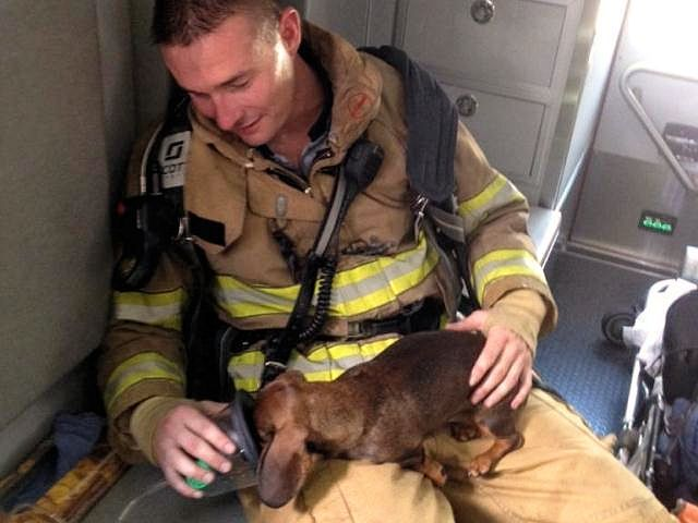 Firefighter With Pet Oxygen Mask Saves Dachshund Puppy