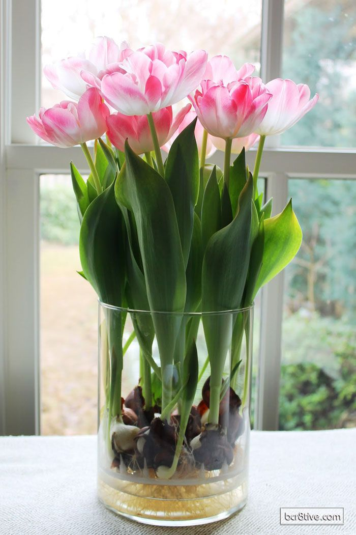 Decorate For Spring With Forced Bulbs For Indoor Blooms