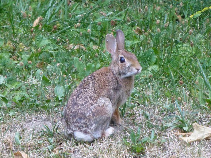 Wild Backyard Animals : Backyard wildlife