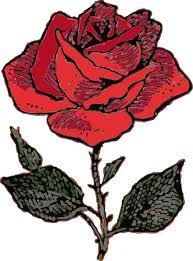 general rose clip art | Rose Wedding | Pinterest