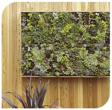 Grovert living wall vertical 45 cell planter succulents for Living wall planter
