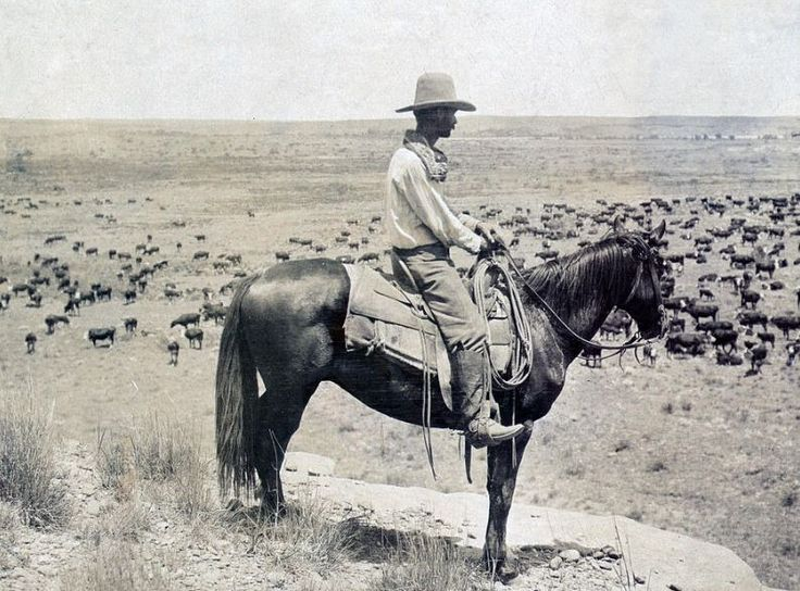 Old cowboy pic.  Home on the range.