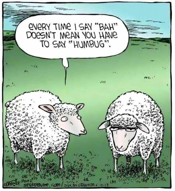 Овца Анекдоты