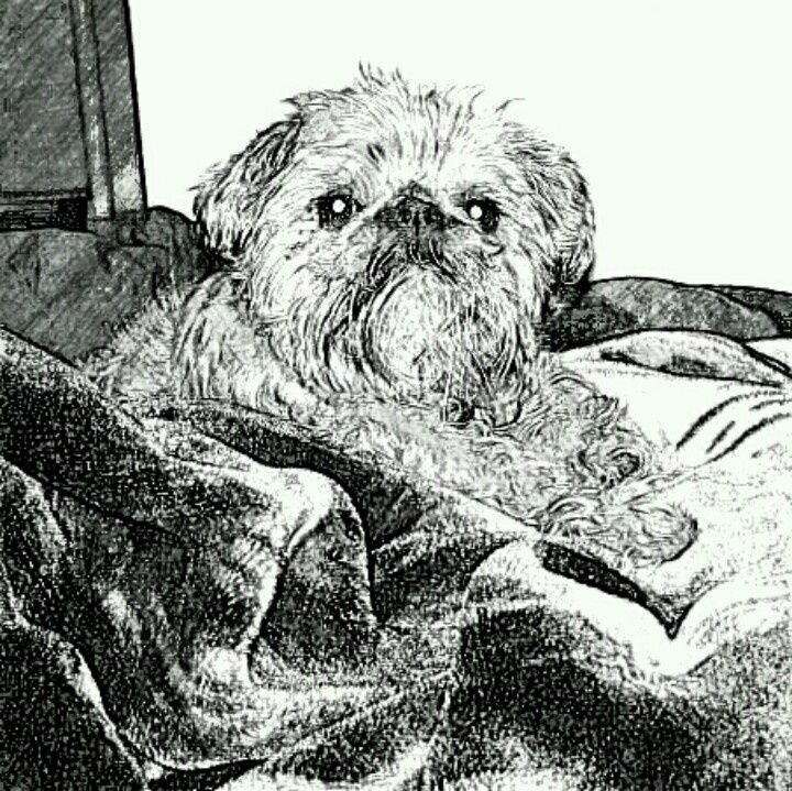 Miss my Stormie girl so much. | Love My Dogs, but I Love Cats TOO ...