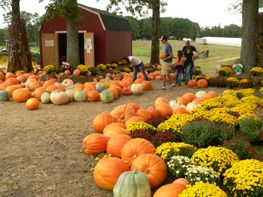 Gross Farms - Pumpkin Patch  1606 Pickett Road  Sanford, NC  27332  Phone:  919-498-6727  www.grossfarms.com