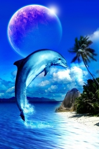 Dolphin Fun with facts and pictures  fohnnet