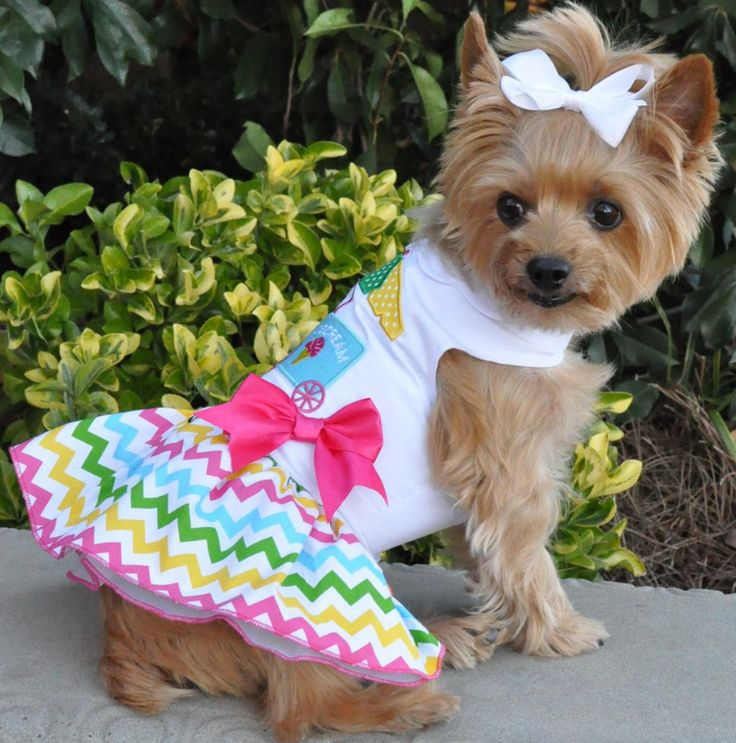 Best  Dog Themed Food Ideas On Pinterest Dog Parties
