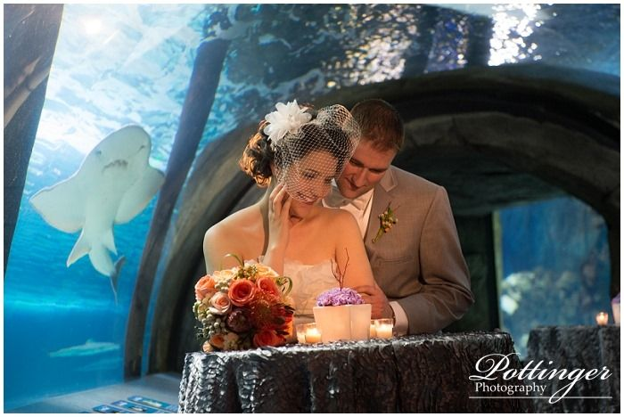 event newport aquarium bridal show