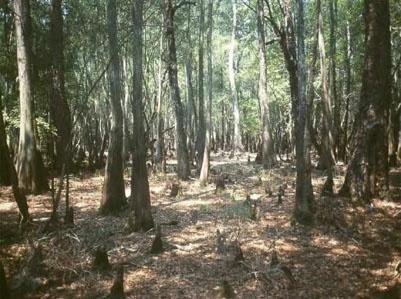 ap english okefenokee swamp essay