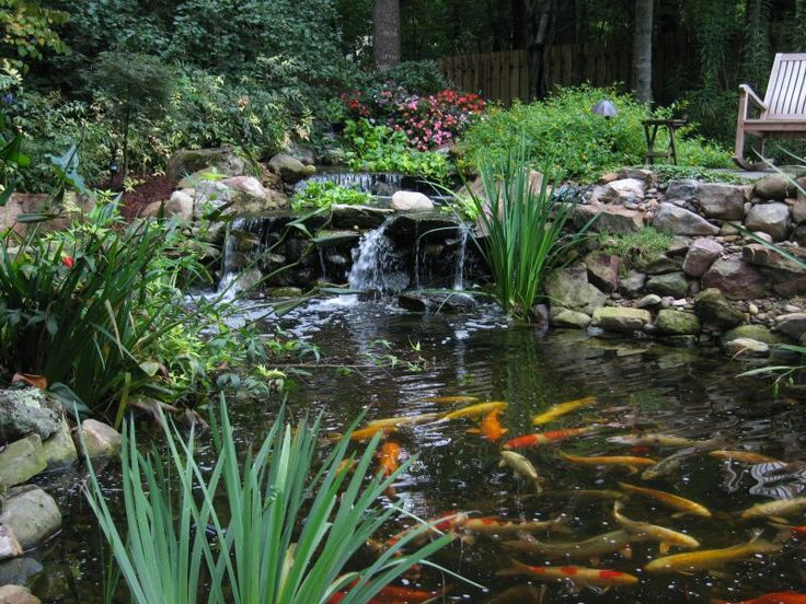 Koi pond waterfall and koi pond outdoor living pinterest for Outdoor goldfish pond ideas
