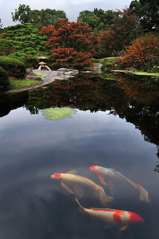 Imperial palace garden tokyo japan pinterest for Koi fish pond japan